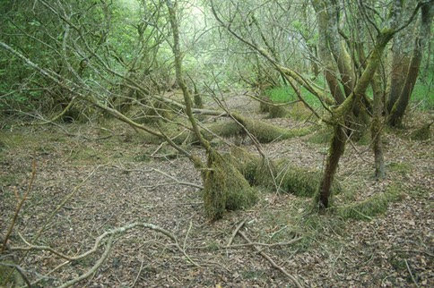 Wooded Turlough